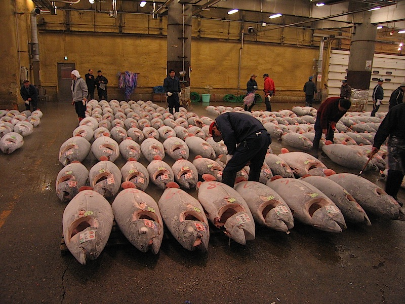 Tsukiji_Fish_market_and_Tuna.JPG