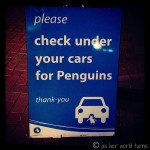 Please Check Under Your Cars for Penguins: An Evening on Phillip Island