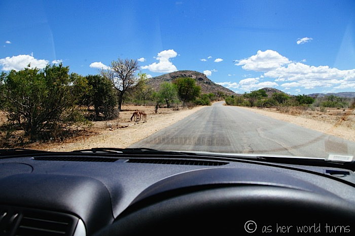Safari Self-Drive at Kruger National Park | As Her World Turns
