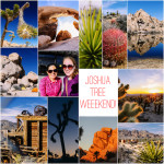Planning a Weekend in Joshua Tree
